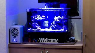 下駄箱の上に観賞魚水槽を置くとしたらどのサイズまで?重さ対策は?